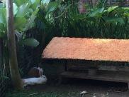 Firefly Eco Lodge, Ubud
